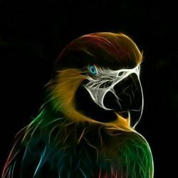 کانال پرندگان زینتی