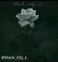کانال Black city