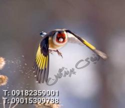 کانال دنیای پرندگان