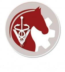 کانال سلامت و صنعت اسب