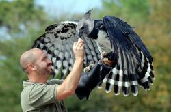 کانال پرندگان شکاری