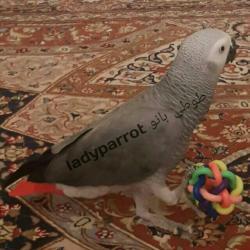 کانال Ladyparrot.birdshop