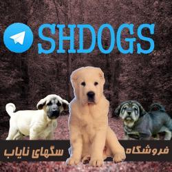 کانال فروشگاه سگهای نایاب
