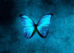 صفحه اینستاگرام پیرسینگ بال آبی