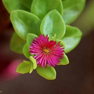 کانال روبیکا پرورش گل و گیاه