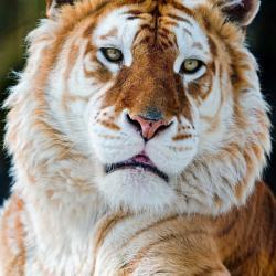 کانال روبیکا باغ وحش خاص
