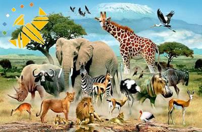 کانال سروش دانستنی های حیوانات