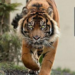 کانال روبیکا حیوانات جهان