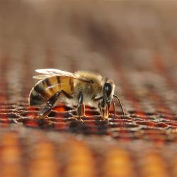صفحه اینستاگرام عسل طبیعی وارده کنجد
