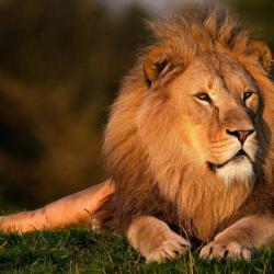 کانال روبیکا حیوانات و حیاط وحش