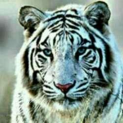کانال سروش دنیای حیوانات
