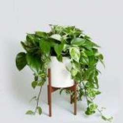 کانال سروشنگهداری گیاهان آپارتمانی
