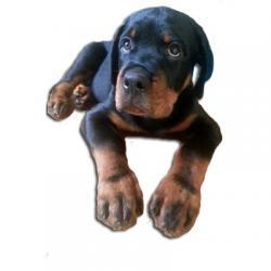استیکر سگ
